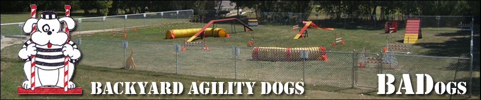 Backyard Agility Dogs -